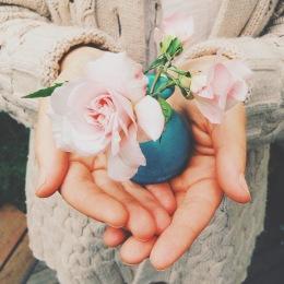cecil bruner roses